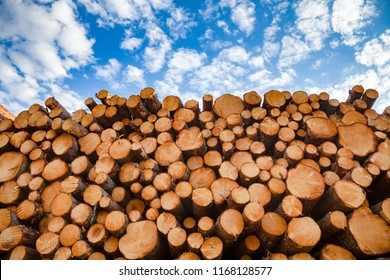 Stacked wood logs against blue sky - lumber or timber industry concept