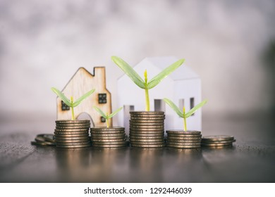 stacking dollars coins tree growing on coins and a house model.save and investment for buy house concept .for the future.