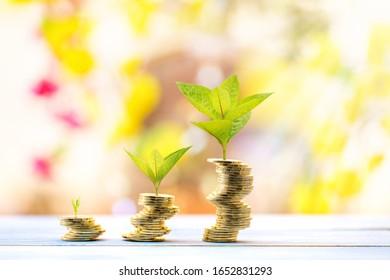 Acumular tres monedas de oro y plantas con crecimiento en la cima con pasos a la luz del sol en el parque público, Inversión empresarial y el concepto de ahorro de dinero.