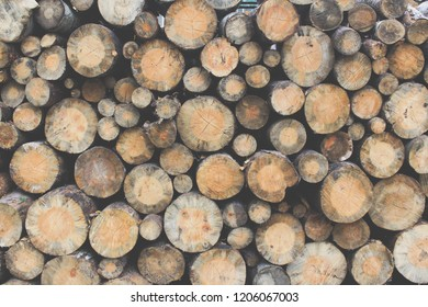 Stacks of chopped logs