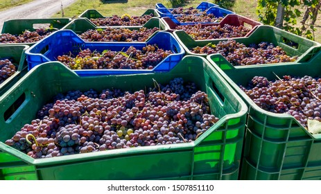 Stacks of colorful plastic baskets filled with bunches of black grapes about to arrive at the winery during the harvest