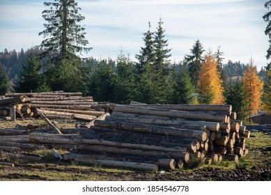 Stacks of fir logs in the apuseni mountains, romania