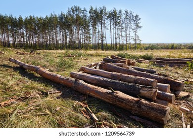 Stacks of firewood in the sawmill. Pile of firewood. Firewood background. Poor woods are on the background. Ecological and environmental problems