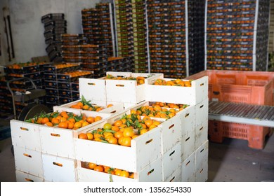 Stacks of  fruit boxes with fresh ripe  tasty mandarin oranges in storage warehouse