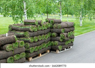 stacks of sod rolls for landscaping. Lawn grass in rolls on pallets on street. rolled grass lawn is ready for laying