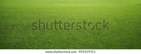 Stadiongras