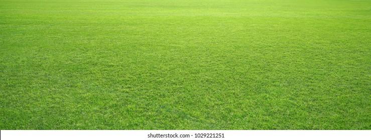 stadium grass landscape