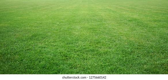 stadium grass texture