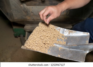 staff Quality Inspector at animal feed, check Hardness of food pellets Exit the pellet machine. Feed production