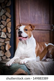 stafford dog vintage