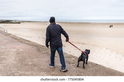 staffordshire bull terrier dog pulling on a harness to try and go in a different direction to his owner on a promenade at low tide on a beach in winter in Kewnt, Thanet, UK