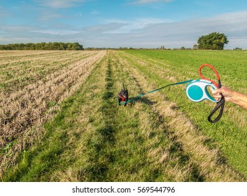 Staffordshire bull terrier dog running in a field on a long flexi retractable, extendable leash or lead held by a man's hand.