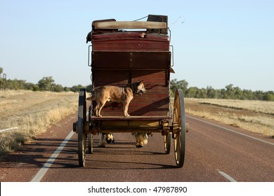 A stage coach travels a lonely road in Outback Australia with dog riding on the back.