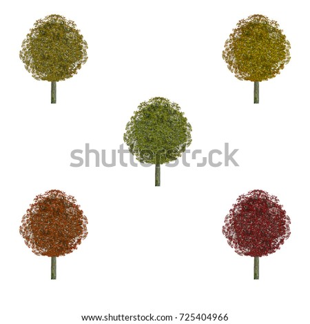 stages color change tree during autumn stock photo edit now