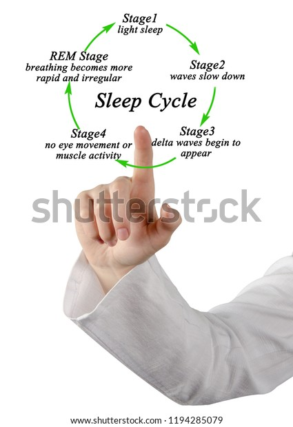 Stages Sleep Cycle Stock Photo (Edit Now) 1194285079