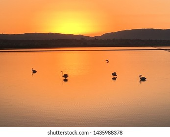 Stagno Cagliari Sardinia - Cagliari's Pond with Flamingos at sunrise sunset