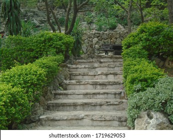 A stair image with a small monkey sitting on top with green plan. beautiful look