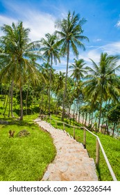 Stair Walkway through Palms