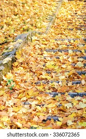 Staircase covered with yellow autumn leaves