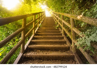 staircase pathway in the beautiful forest