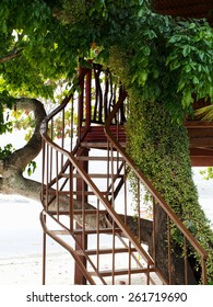 Staircase to wooden tree house