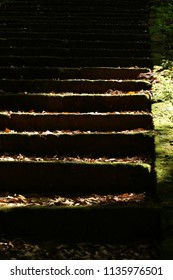 The stairs covered with dead leaves