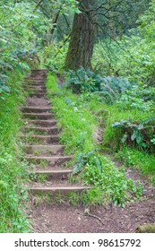 Stairs in a forest as part of hiking trail