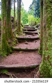 Stairs going up hillside in forest toward sky