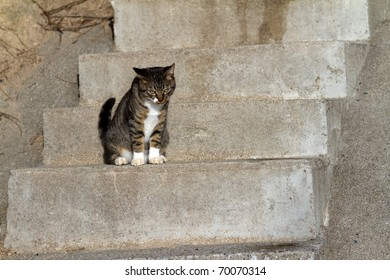 Stairs and kittens