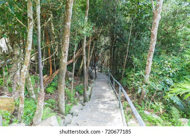 Stairs at the Langkawi Sky Bridge forest walk trails.