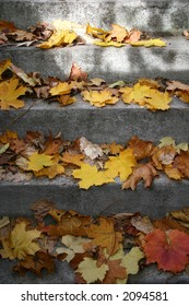 stairs in leaves