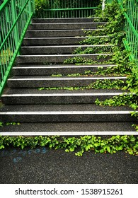 Stairs in the park with green ivy