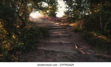 Escala la colina arenosa en las tierras secas del Parque Nacional Veluwe en los Países Bajos