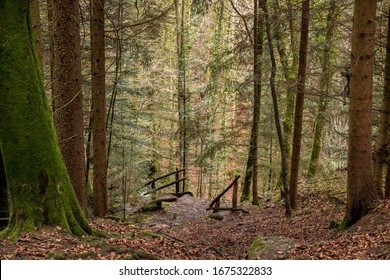 Stairway to the canyon and to the creek in the middle of the forest