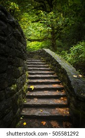 Stairway leading into lit trees with fall leaves.