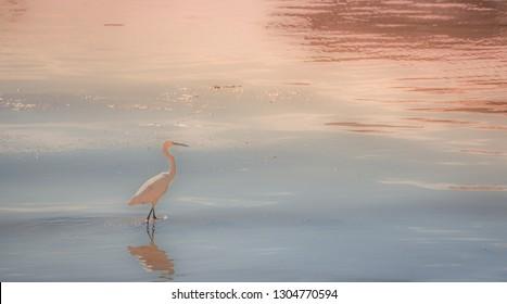stalk bird in water