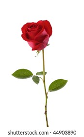 A stalk of red rose isolated in white
