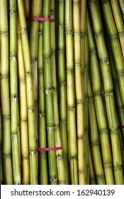 Stalks of fresh sugar cane for extracting the juice