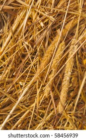 Stalks of grass in a haystack.