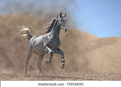 the stallion gallops in the desert