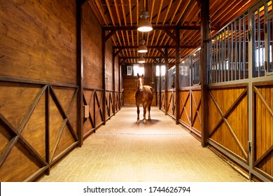 stallion horse of the bay suit in the stable