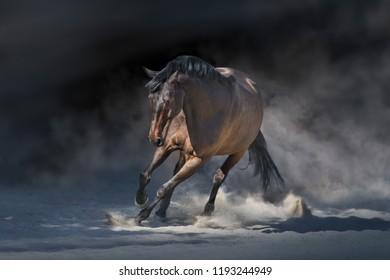 Stallion in motion in desert dust against dramatick background
