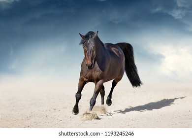 Stallion in motion in desert dust against beautiful sky