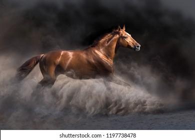Stallion in motion in desert dust against dark background