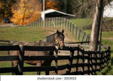 Stallion at New York Thoroughbred Farm