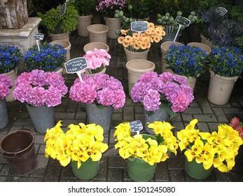 Stalls at the Amsterdam Flower Market