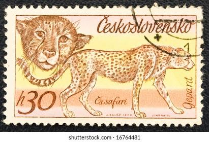 Stamps 1976 year, USSR-Czechoslovakia, cheetah