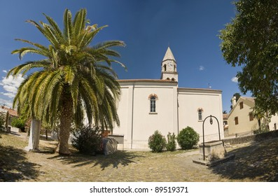 St.Anastasia cathedral  in Biograd na moru with the palm tree