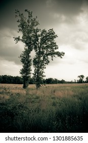 Stand alone trees