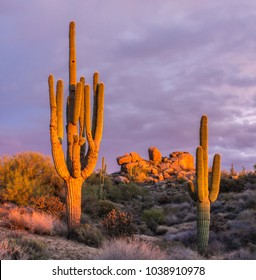 A stand of Arizona Saguaro cactus at sunset with rock formation in background.